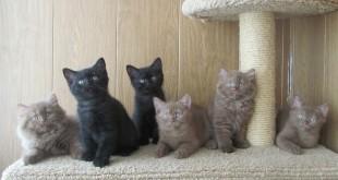 Как приучить к когтеточке котенка