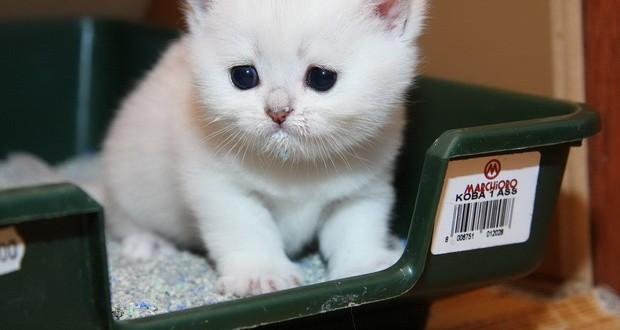 КАК приучить КОТЕНКА к лотку быстро за 1 ДЕНЬ: самые эффективные методы приучения кошки к туалету