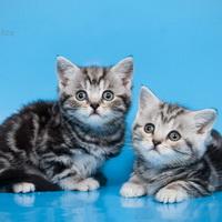 bri-cats.blogspot.com