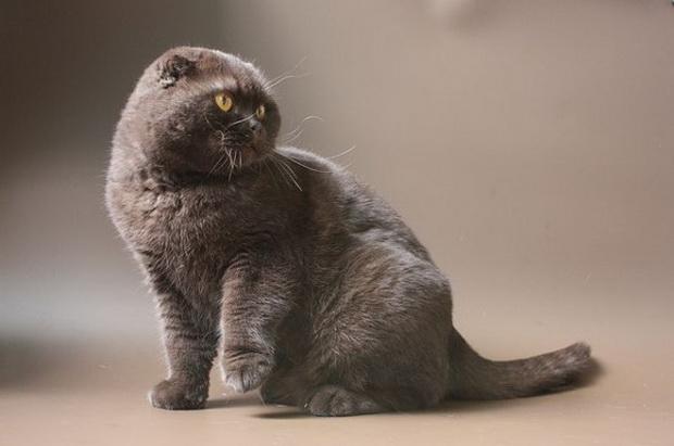 Приснилась кошка Это многое значит!