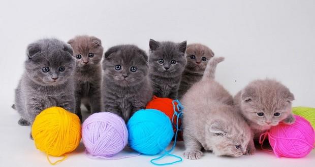 Игрушки для котят своими руками идеи