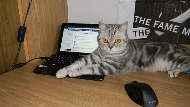 Вредные правила наших кошек