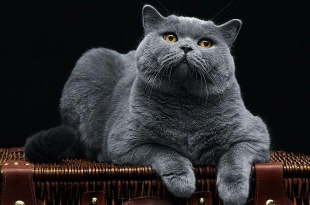 Как кормить кошку сухим кормом
