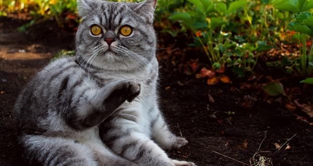 Кошка не может покакать