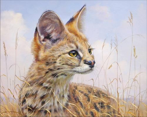 камышовый кот фото