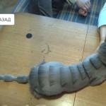 strizhki_dlya_koshek_19