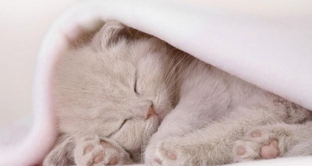 Роды кошки в домашних условиях