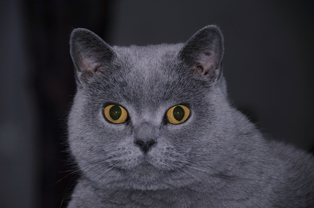 Кот насрал на кровати у меня на глазах
