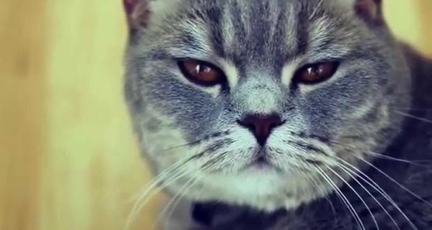Как отучить кота метить территорию в квартире советы и методы борьбы