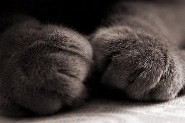 Симптомы мочекаменной болезни у кота и кошки