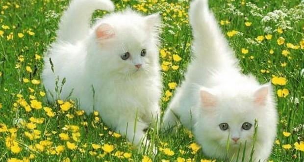 Как проявляются глисты у кошек