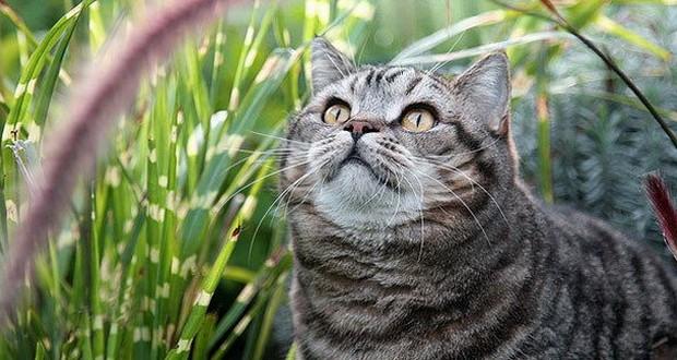 Препараты от блох и клещей для кошек купить в интернет зоомагазине Любимчик
