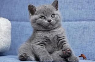Смешные и прикольные клички для котов и кошек