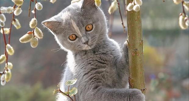 Подкожный клещ у кошек лечение в домашних условиях: симптомы