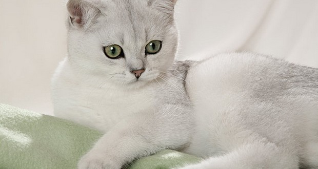 Как ухаживать за кошкой после операции стерилизации