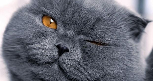 Ожирение у кошек и котов: лечение, диета при ожирении, корм при ожирении, степень ожирения, почему возникло после стерилизации