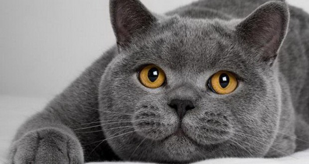 Как посчитать возраст кошки на человеческий