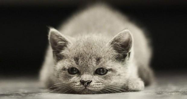 Как определить пол кошки