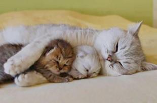 выкармливание котят с низким весом