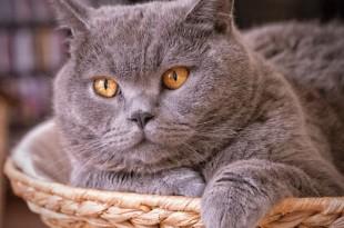 Запах изо рта у кошки