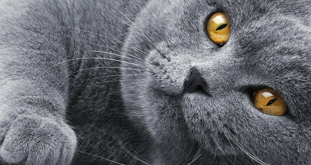 Как определить возраст кошки (  таблица сравнения возраста кошки и человека)