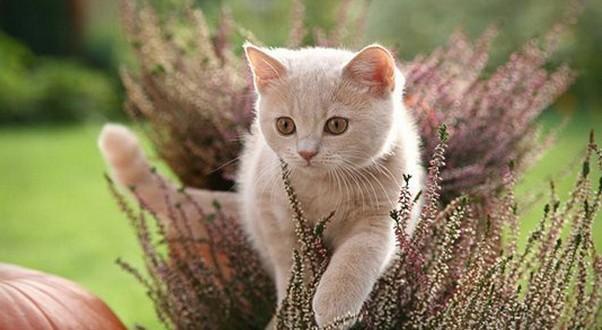 Кошка на нервах выбираем успокоительное средство