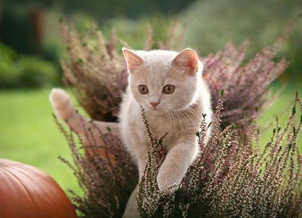 Успокоительное для кошек фото
