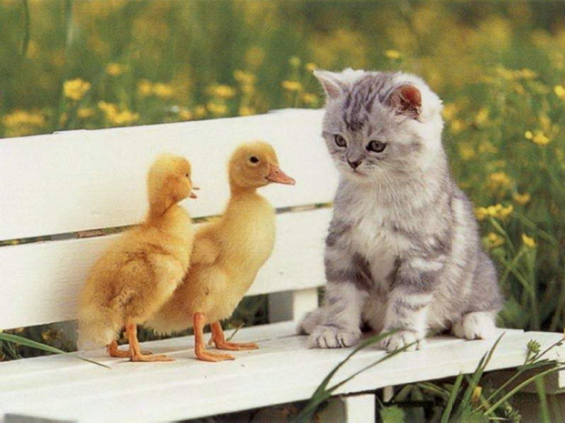 кошки для аллергиков фото