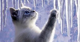 Как наказать кошку за плохое поведение