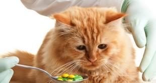 Какие витамины давать кошке, обзор лучших комплексов