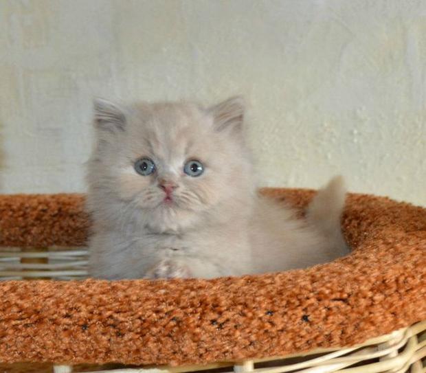 уход за новорожденными котятами