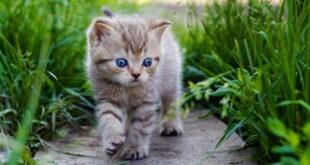 Как глистогонить котенка с улицы: схема и пошаговая инструкция