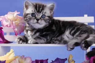 Рейтинг кормов для кошек