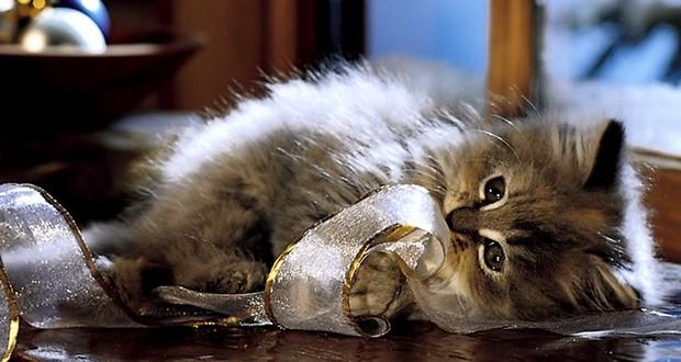Что делать, если слезятся глаза у котенка - Блог о кошках британской породы