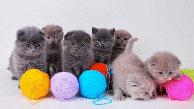 как сделать игрушки для котёнка фото