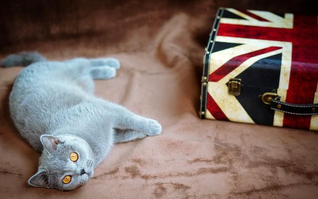 С кем оставить кошку на время отпуска