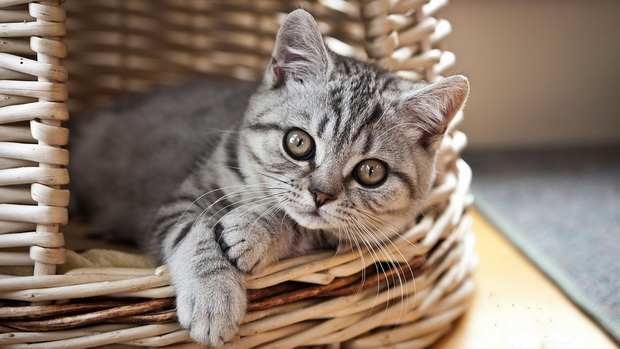 Как кормить взрослого кота натуралкой