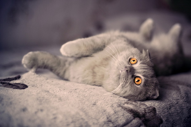 Имена котов на английском с переводом