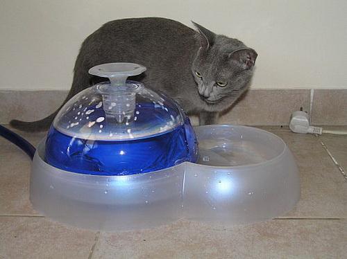 Фонтан-поилка для кошки своими руками