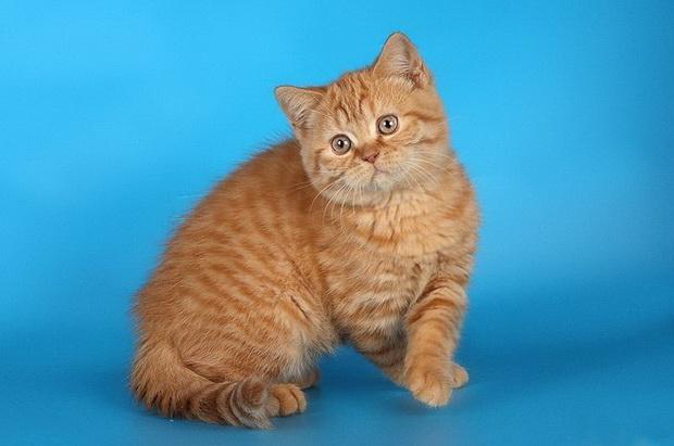 Какое имя подходит для рыжего кота