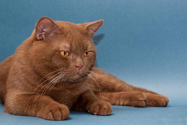 профилактика глистов у человека и кошки