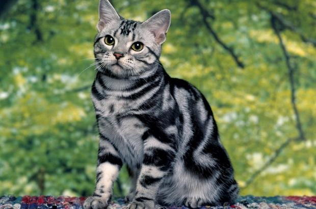 Кот с кошкой занимаются