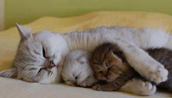 Новорожденный кот нок не бер т сосок