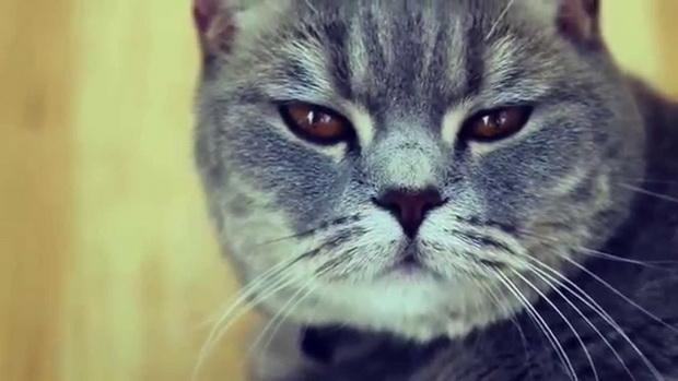 Чужие коты метят что делать
