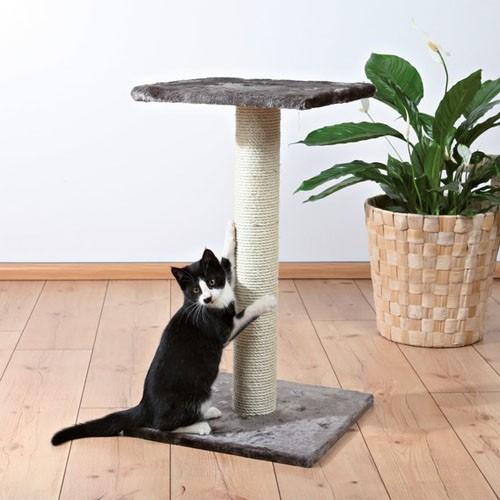Кошачьи когтеточка