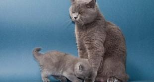 С какого возраста кошку с котом можно сводить