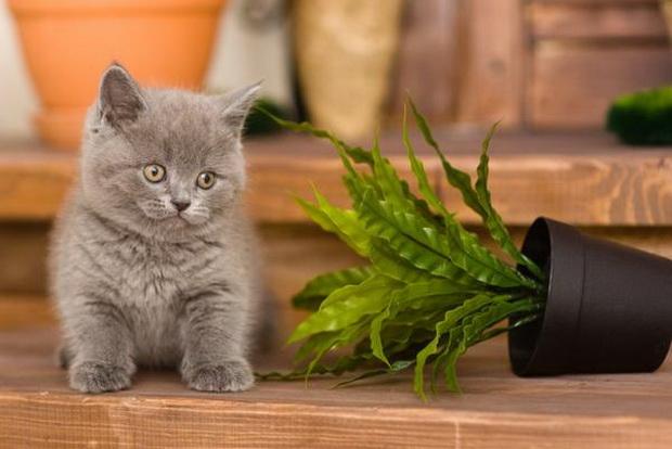 Кот ест цветы что делать