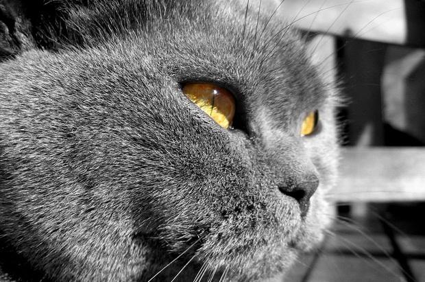 У кота понос и рвота чем лечить