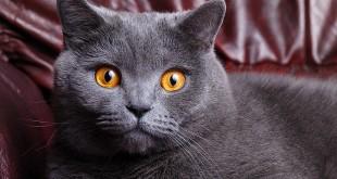 Прививка от бешенства кошкам