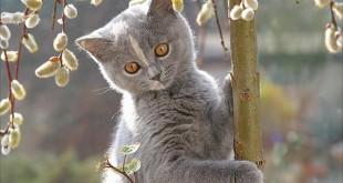 Подкожный клещ у кошек (демодекоз)
